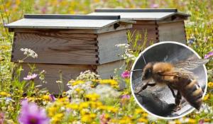 συσκευή εντοπισμού Gps Για μελισσια